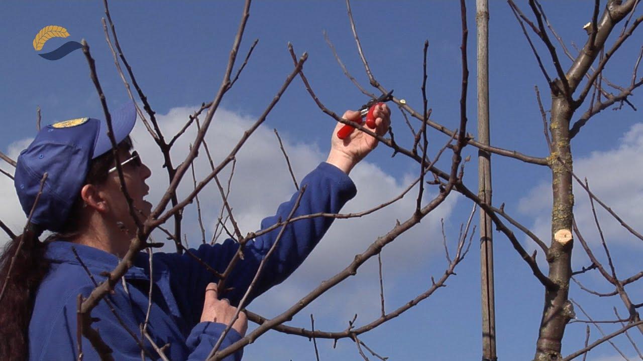 Winter Obstbaumschnittkurs Der Grunen Nachbarschaft 06 03 2015