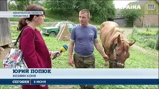 Житель Закарпатья привязал коня к грузовику и тащил его по дороге