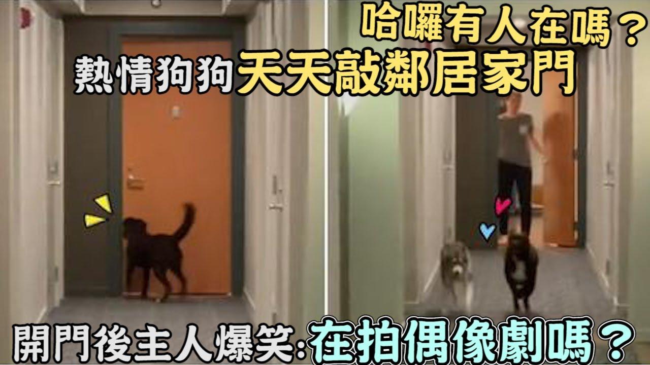 哈囉有人在嗎?熱情狗狗天天敲鄰居家門,開門後主人爆笑:在拍偶像劇嗎?