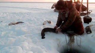 Налим рыбалка в -35(В этот раз с небольшим диалогом. (Разъяснение), 2016-01-18T15:51:57.000Z)