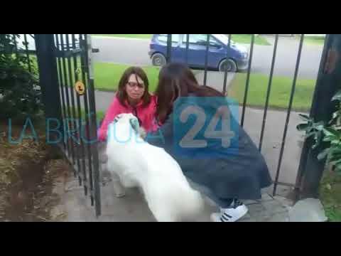 LB24 Reencuentro Con La Mascota Perdida En Bahía
