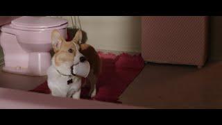 Можно мне еще?  l Собачья жизнь 2017