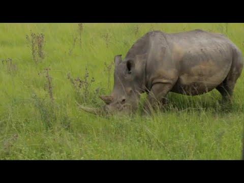 الذكاء الاصطناعي لحماية الحيوانات المهددة بالانقراض في جنوب إفريقيا…  - نشر قبل 41 دقيقة