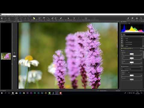 Чем можно заменить  Photoshop и Lightroom