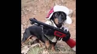 ПРИКОЛЬНЫЕ Кошки и собаки в костюмах или мой хозяин - ИДИОТ! new Best funny 2016
