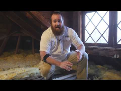 How to Clean Up Animal Droppings In Your Attic