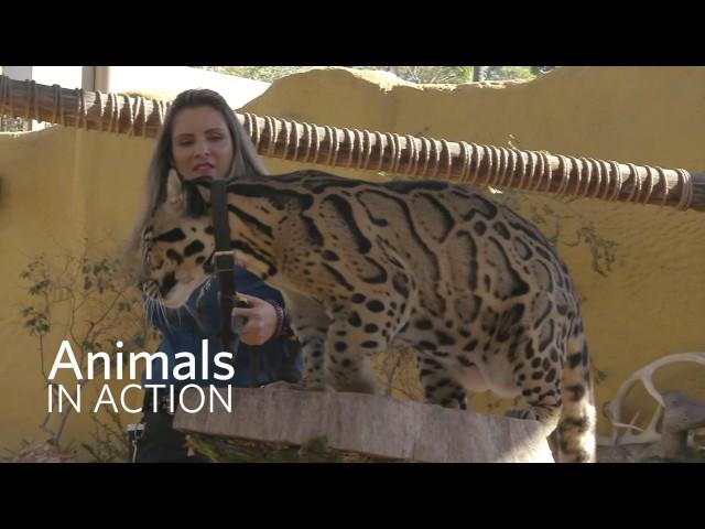 San Diego Zoo Kids Animals In Action San Diego Videos San