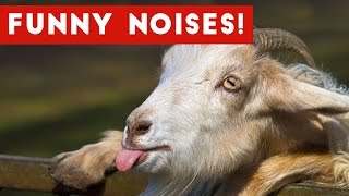 You Laugh You Lose Funny Animal Sounds / Noises | Funny Pet Videos