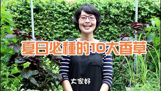 森林有塊田-【夏日超好種】Top 10 必種香草!!
