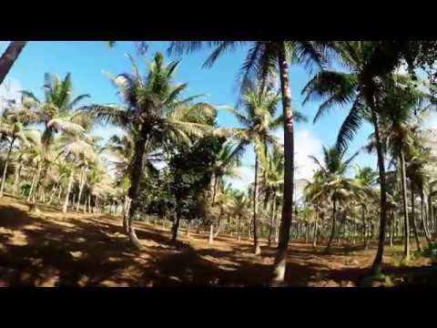 Kallu drink in bangalore dating