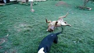 Tatu E Zeus Brincando 2