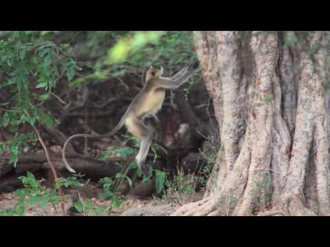 India - GIR Forest, Gujurat