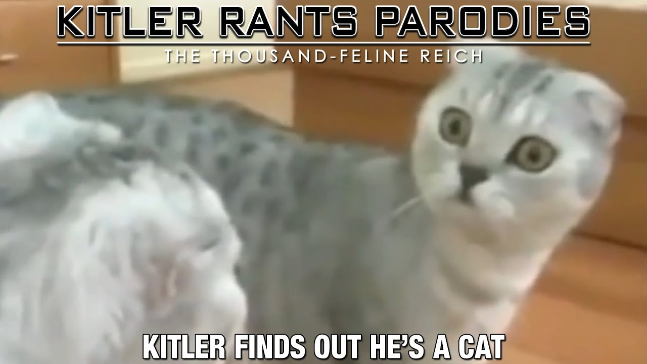 Kitler finds out he's a Cat