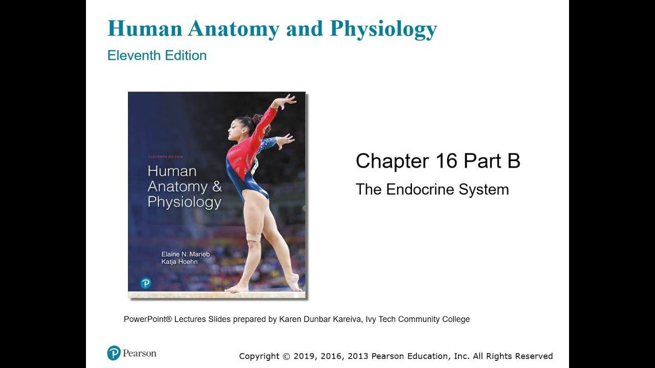 Chapter 16: The Endocrine System - Part II