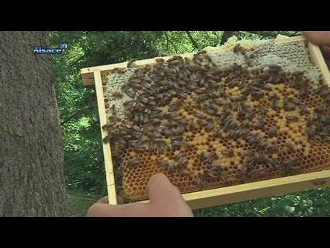 L'apiculture au naturel! (Haut-Rhin)