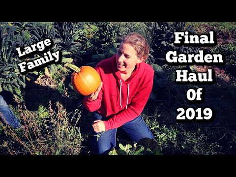 Final Large Family Garden Haul | Getting Ready for Winter | Bluebell had Her Calf