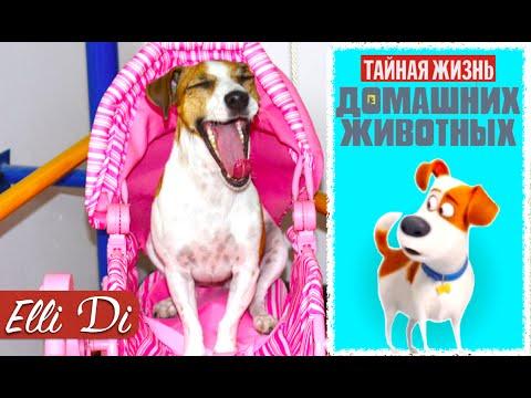 ✿ Тайная Жизнь Домашних Животных Игрушки The Secret Life of Pets Toys Смешные Животные Видео Детям