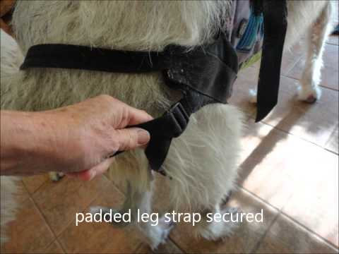 Seat Harness for giant breed dog with back issues