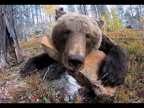 Очередной медведь вредитель.