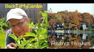 BTMG090 Gardening In Michigan with Andrea Hughes