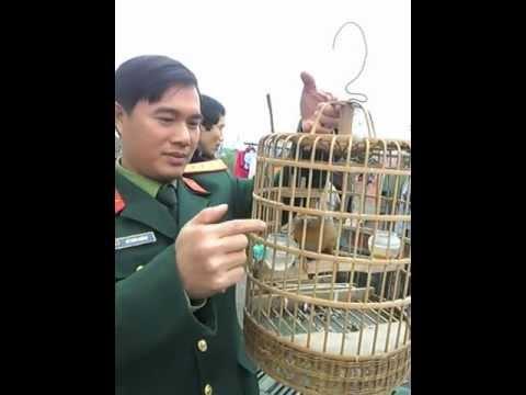 chim hoa mi ( Thang cao bang )