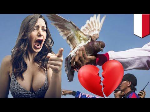 Balap burung dara, penyebab perceraian tinggi di Purbalingga - TomoNews