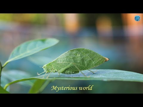 Mystery of the mysterious world - Unsolved Mysteries of the Universe