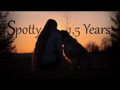 Amazing Tricks by Australian Shepherd Spotty [1,5 years]