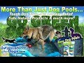 New Dog Pools 2019 and Tough Dog Toys, Pet Anxiety Relief, Natural Options