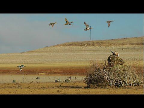 SABAH BEKİ ÖRDEK AVI. Dronla Keşif Sonuç Verdi. Limitleri Doldurduk. Duck Hunting,Охота на уток 2020