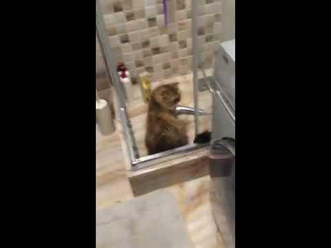 Удобная планировка  маленькой ванной комнаты. Уместилось ВСЁ!