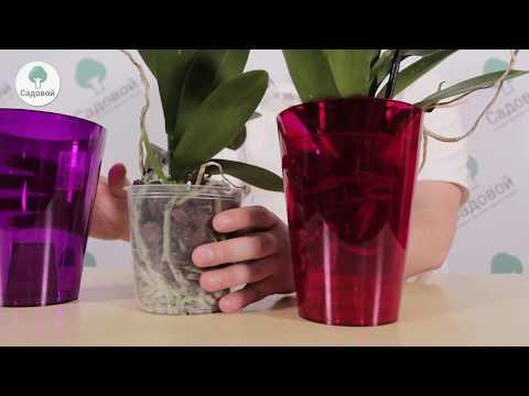 Как выбрать горшок для орхидеи?