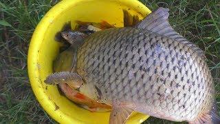 Рыбалка Ловля карпа и карася на поплавок на реке летом(июнь) My fishing