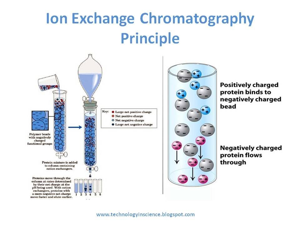 Ion Exchange Chromatography - Theory and Principle - YouTube - cation exchange chromatography