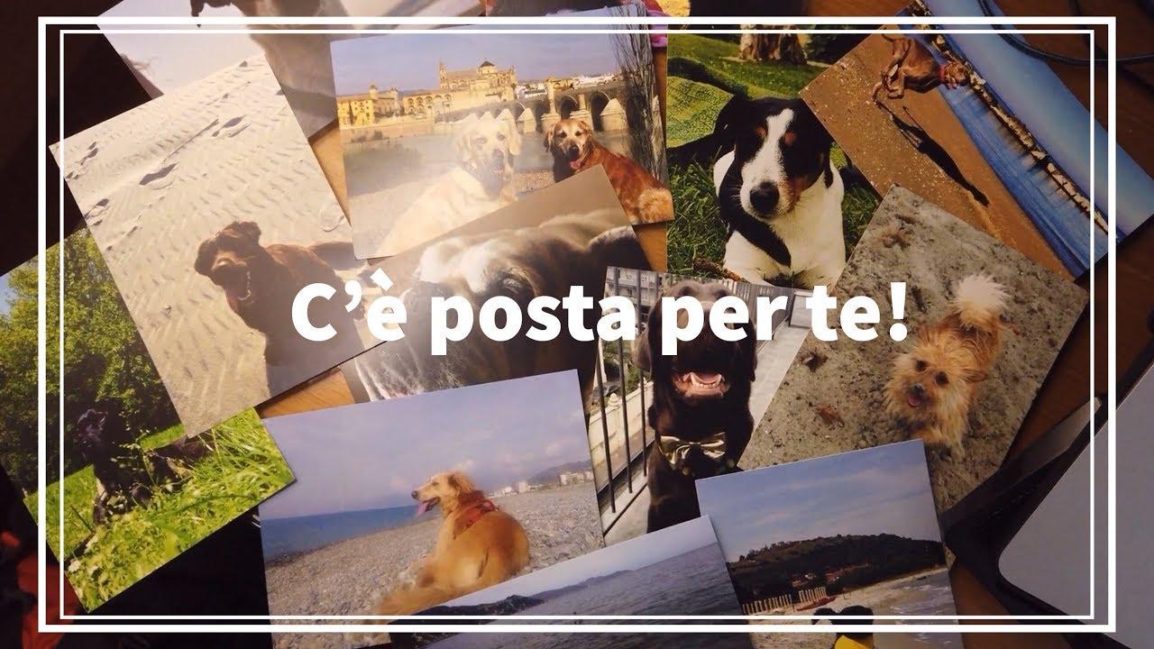 Calendario Pastore Tedesco 2020.Casting Calendario Pelosi In Vacanza 2020 Vacanze Con Il Cane