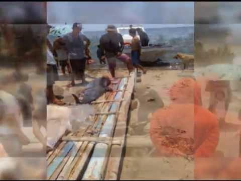 Dead dolphin washes ashore in Ilocos Sur