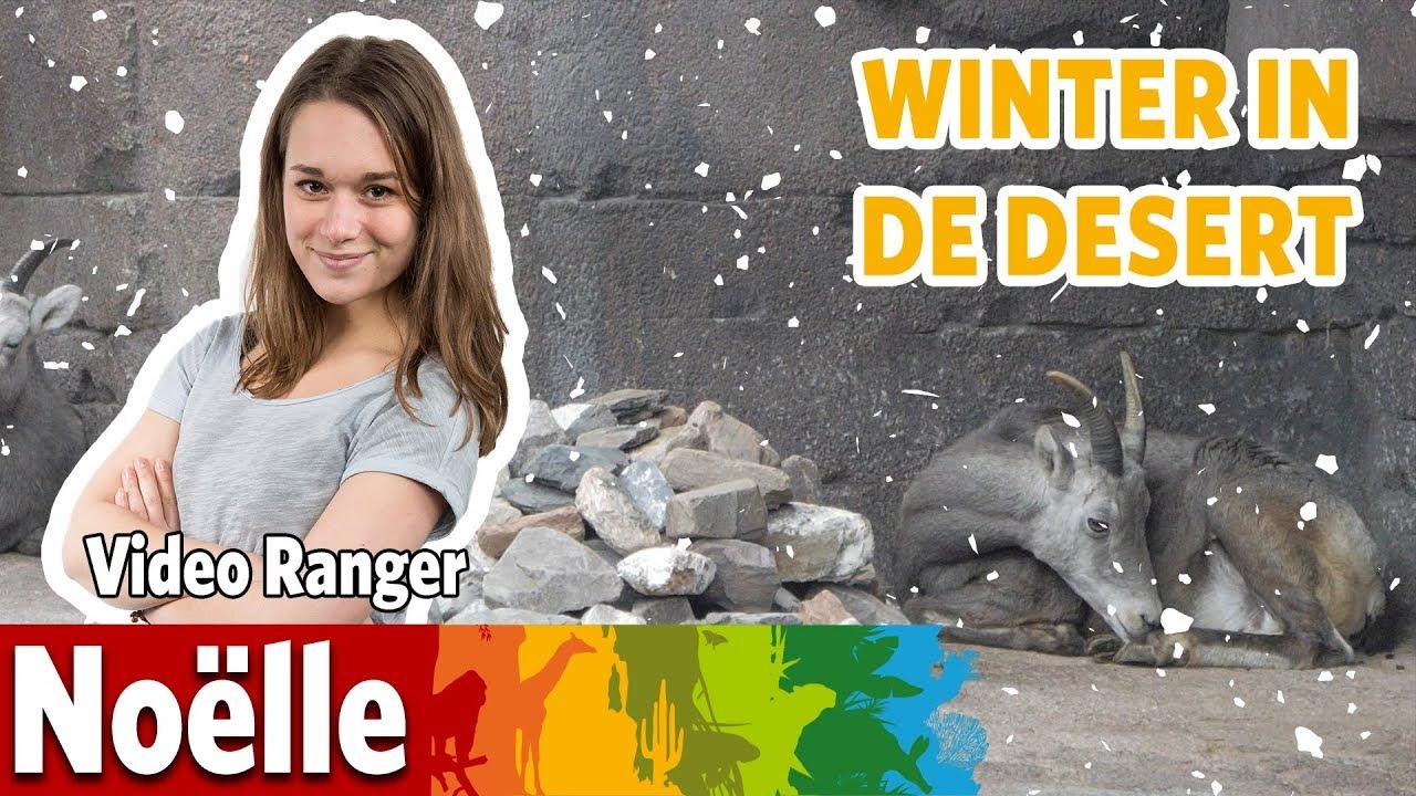 ❄️ De Desert bereidt zich voor op de winter! ❄️