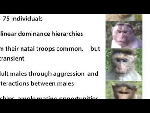 The Bonnet Macaque: Uniquely Adaptable, but Ultimately Threatened: Dr. Sinha