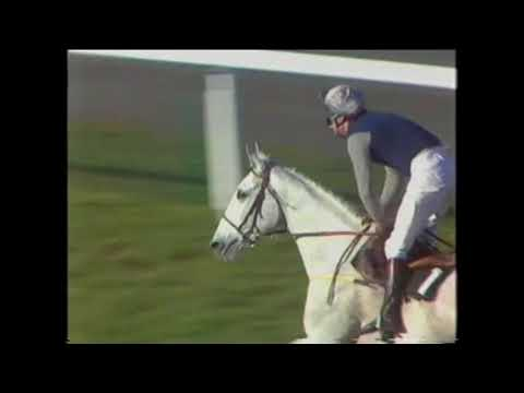 1989 Victor Chandler Handicap Chase Ascot Desert Orchid