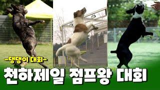 강아지 점프 챔피언은 누굴까?
