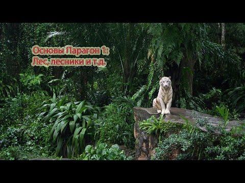 видео: Основы Парагон 1: Лес, лесники и т.д.
