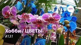 171#131 / Хобби Цветы / 06.2019 - OBI (ХИМКИ). ОБЗОР
