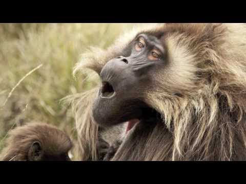 Top 10 Contagious Yawning Animals