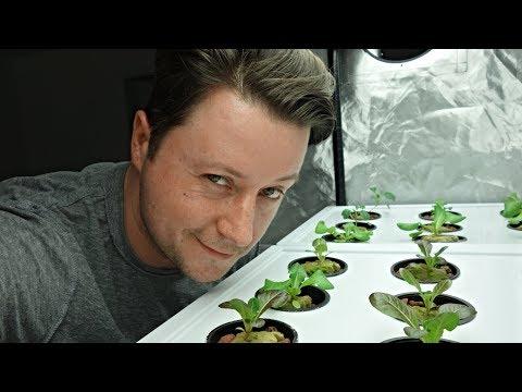 Romaine Lettuce Hydroponics + Kale Plants ( Clean Eating )