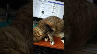 кошки должны что-то есть. :)