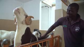Amélioration de la compétitivité durable du secteur de l'élevage au Sénégal (version SERERE)