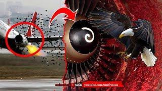Jika Mesin Pesawat Kemasukan Burung, Inilah Yang Terjadi