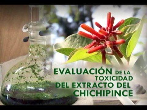 Evaluación de la toxicidad del extracto del Chichipince