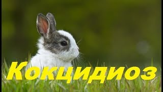 Лучшее средство от кокцидиоза кроликов. Кокцидиоз у кроликов. Профилактика кокцидиоза