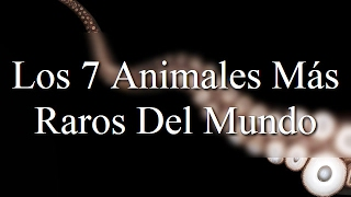 Video Los 7 Animales Más Raros Del Mundo download MP3, 3GP, MP4, WEBM, AVI, FLV Oktober 2018